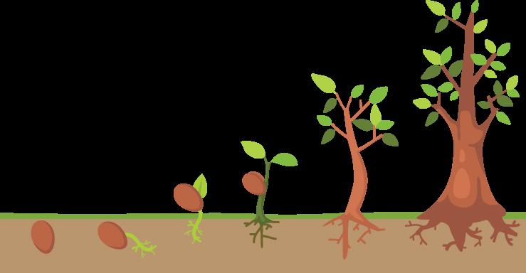 Tree Life Cycle.