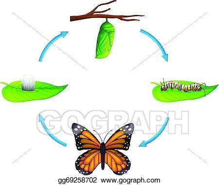 Life cycle clipart 7 » Clipart Portal.