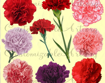 Camellia Clipart Digital Camellia Flower Clip by CustomizableArt.