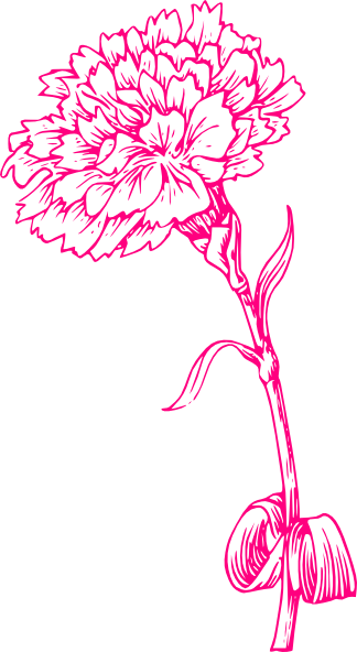 Pink Carnation Sketch Clip Art at Clker.com.