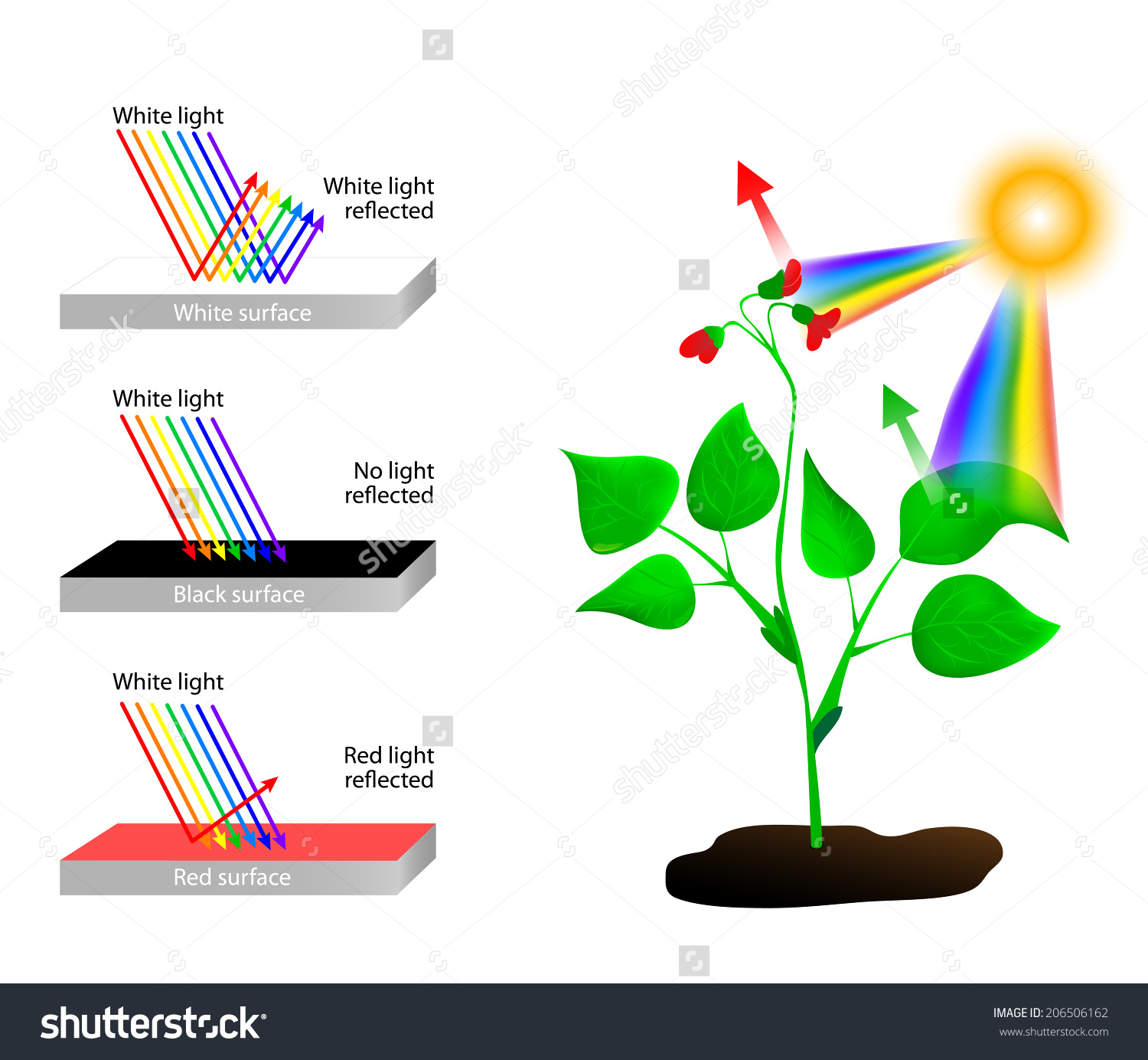 White Reflects All Colors Light Object Stock Vector 206506162.