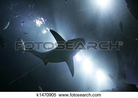 Stock Illustration of shark from below k1470905.