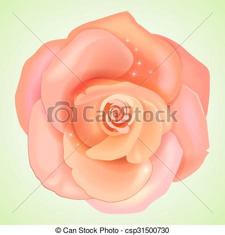 Vectors of Peach pink rose isolated on light background, vector.