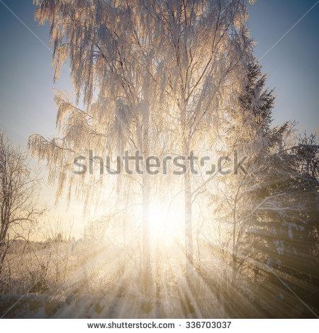 Sun Tree Penetrating Stock Photos, Royalty.