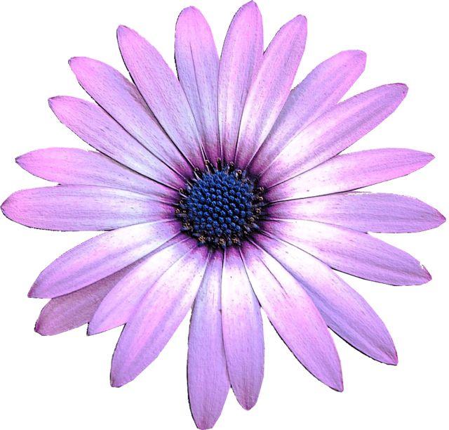 Light Purple Flower Clip Art.