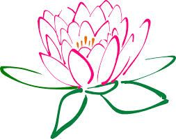 1000+ images about LOTUS FLOWERS on Pinterest.