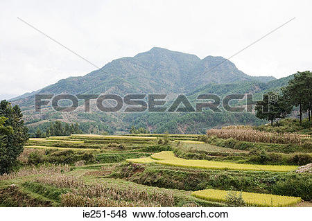 Pictures of Rice terraces lijiang china ie251.
