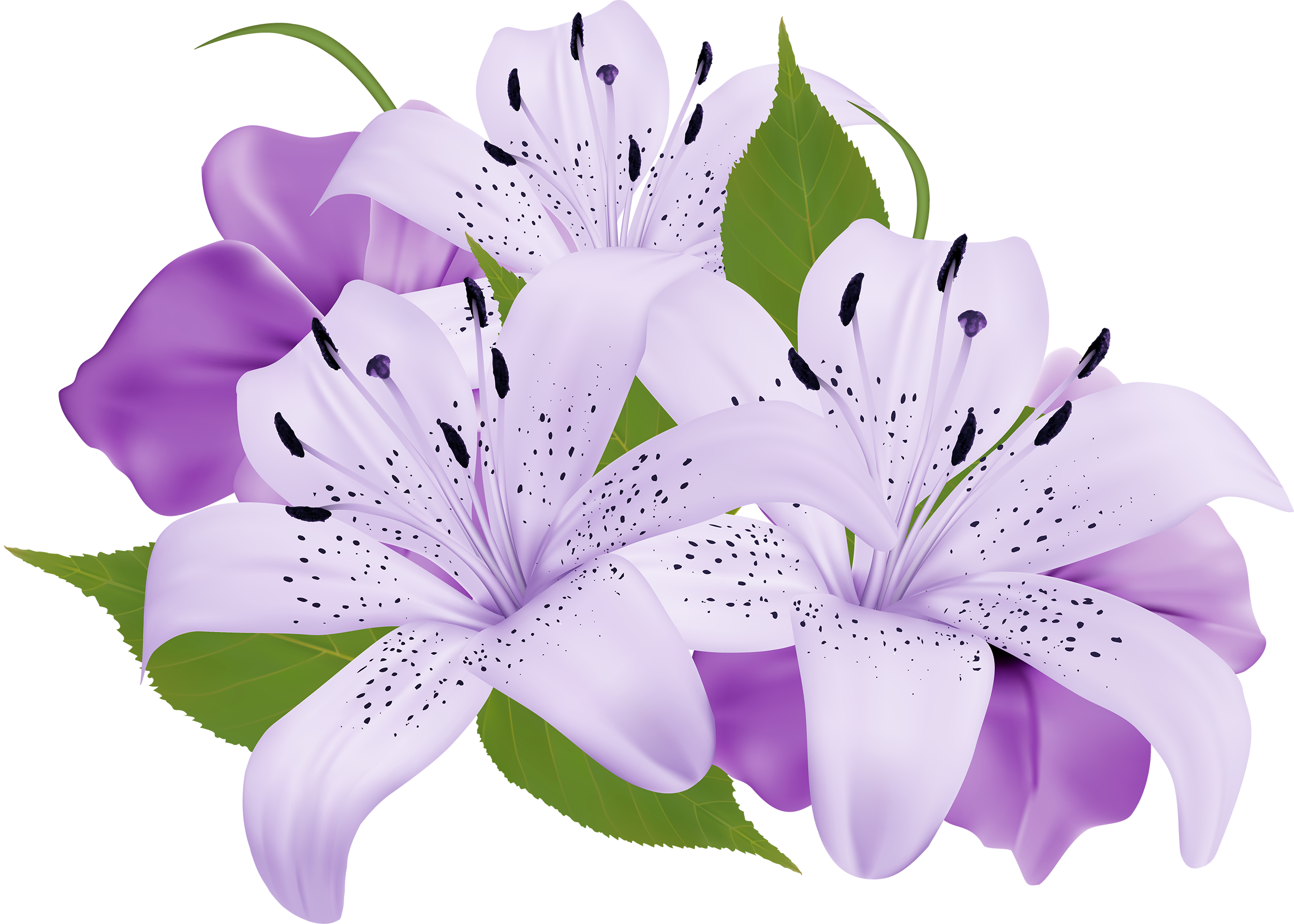 Purple Decorative Flowers PNG Clipart.