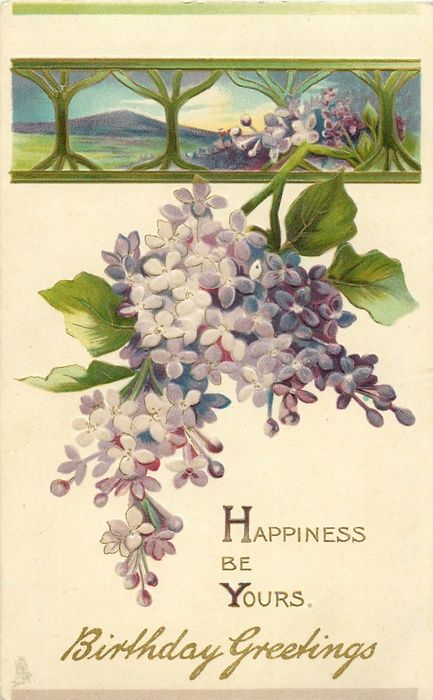 1000+ images about lilacs on Pinterest.