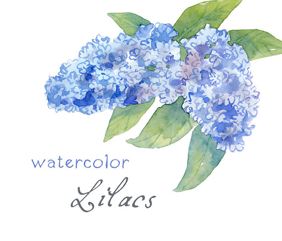 Digital Clipart, Watercolor Flowers, Watercolor Lilacs, Blue by.