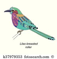 Lilac breasted roller Clip Art Vector Graphics. 2 lilac breasted.