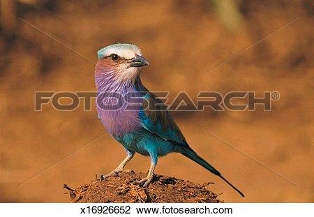 Stock Photo of Lilac.