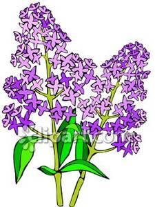Lilac bush clipart 3 » Clipart Station.