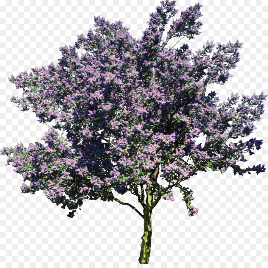 Lilac Tree Png & Free Lilac Tree.png Transparent Images.