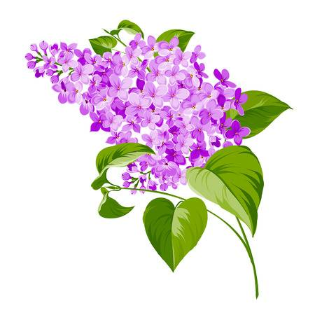 Lilac tree clipart 3 » Clipart Station.