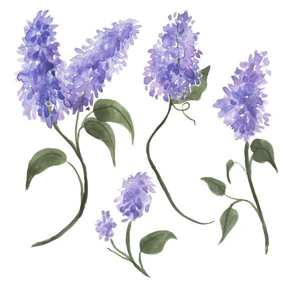Watercolor Lilacs Clip Art.