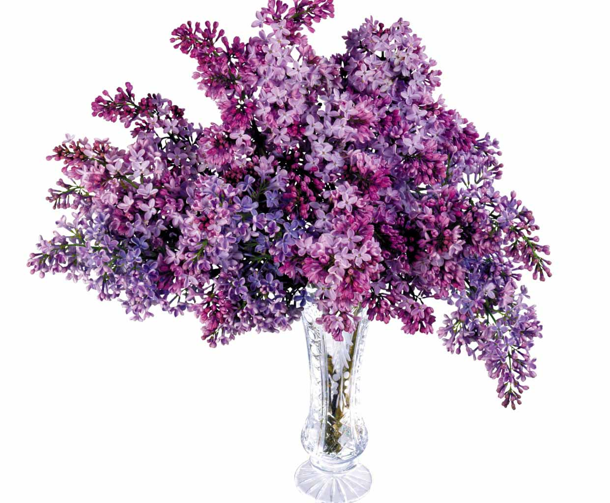 Clipart lilac flowers.