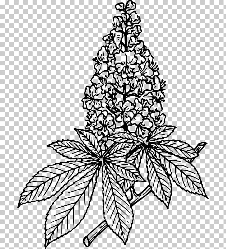Lilac Flower Drawing , chestnut PNG clipart.