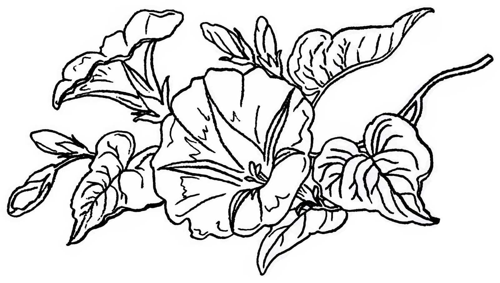 Free Lilac Flower Cliparts, Download Free Clip Art, Free.