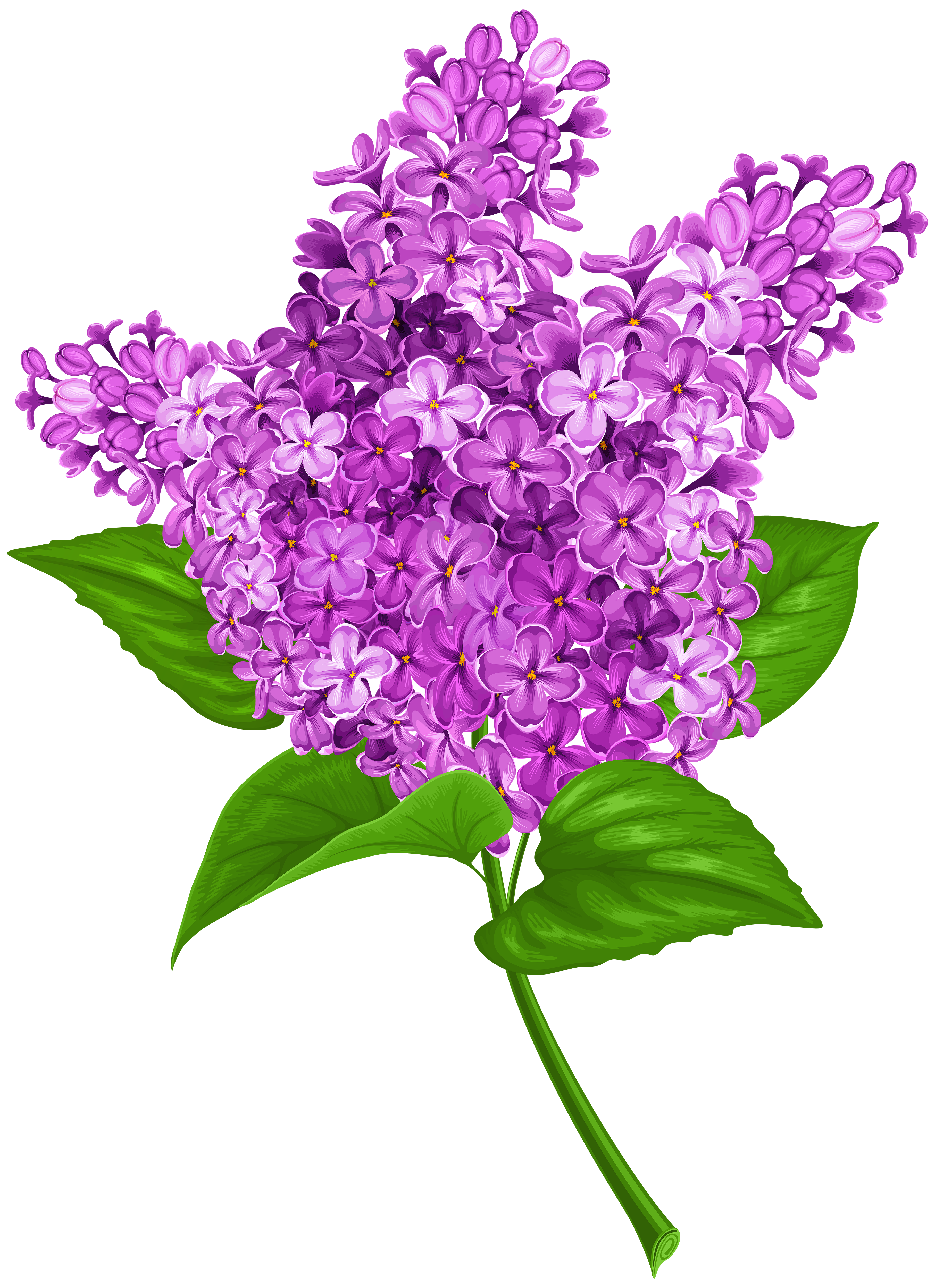 Free Lilac Png & Free Lilac.png Transparent Images #17476.