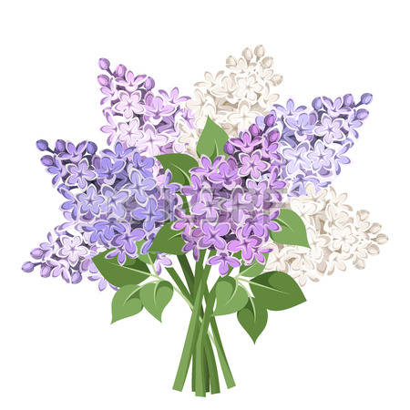 13,973 Lilac Flower Cliparts, Stock Vector And Royalty Free Lilac.