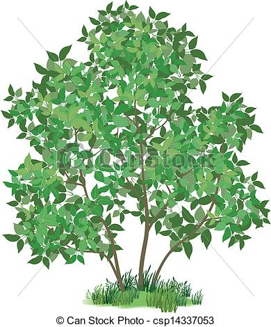 Clipart Vector of Lilac tree and green grass.