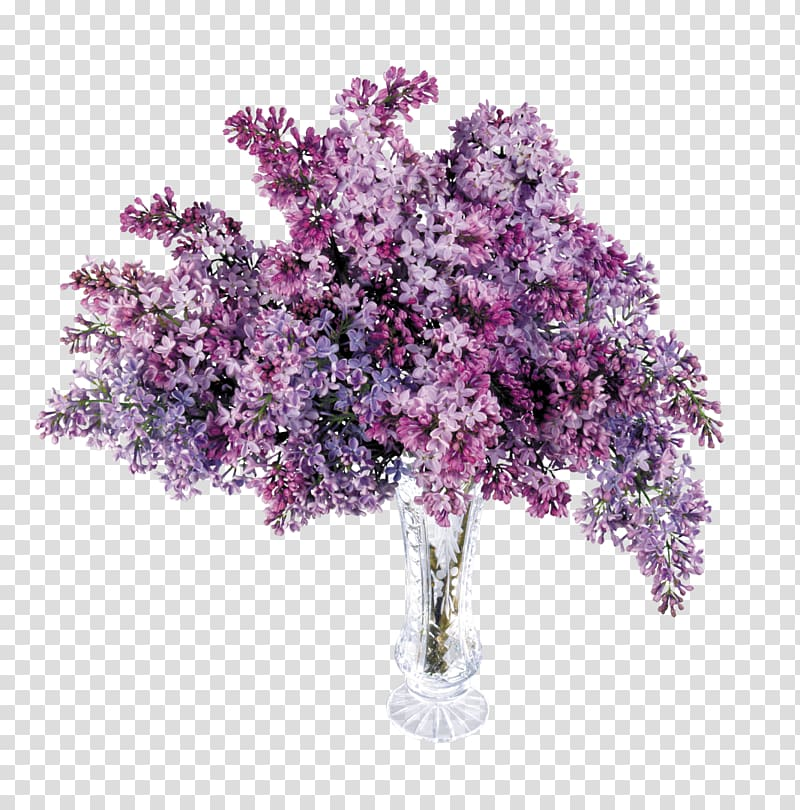 Lilac Purple Lavender , lilac transparent background PNG.