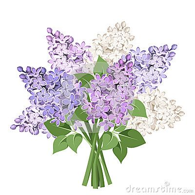 Lilacs Stock Illustrations.
