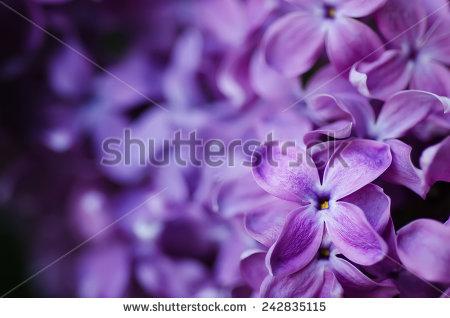 """purple Stamens"""" Stock Photos, Royalty."""