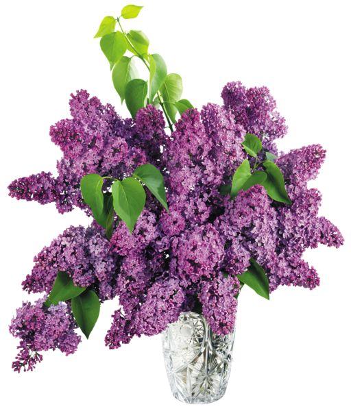 free clipart lilacs.