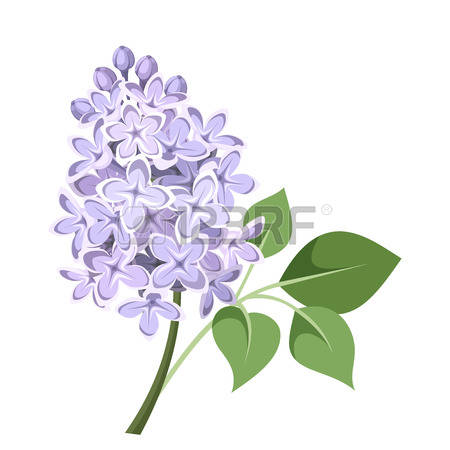 13,300 Lilac Flowers Stock Vector Illustration And Royalty Free.