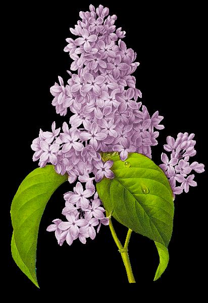 le blog de magnolias.