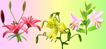 Liliaceae Clipart by Megapixl.