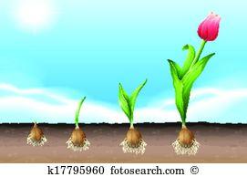Liliaceae Clip Art and Illustration. 27 liliaceae clipart vector.