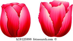 Liliaceae Clip Art and Illustration. 27 liliaceae clipart vector.