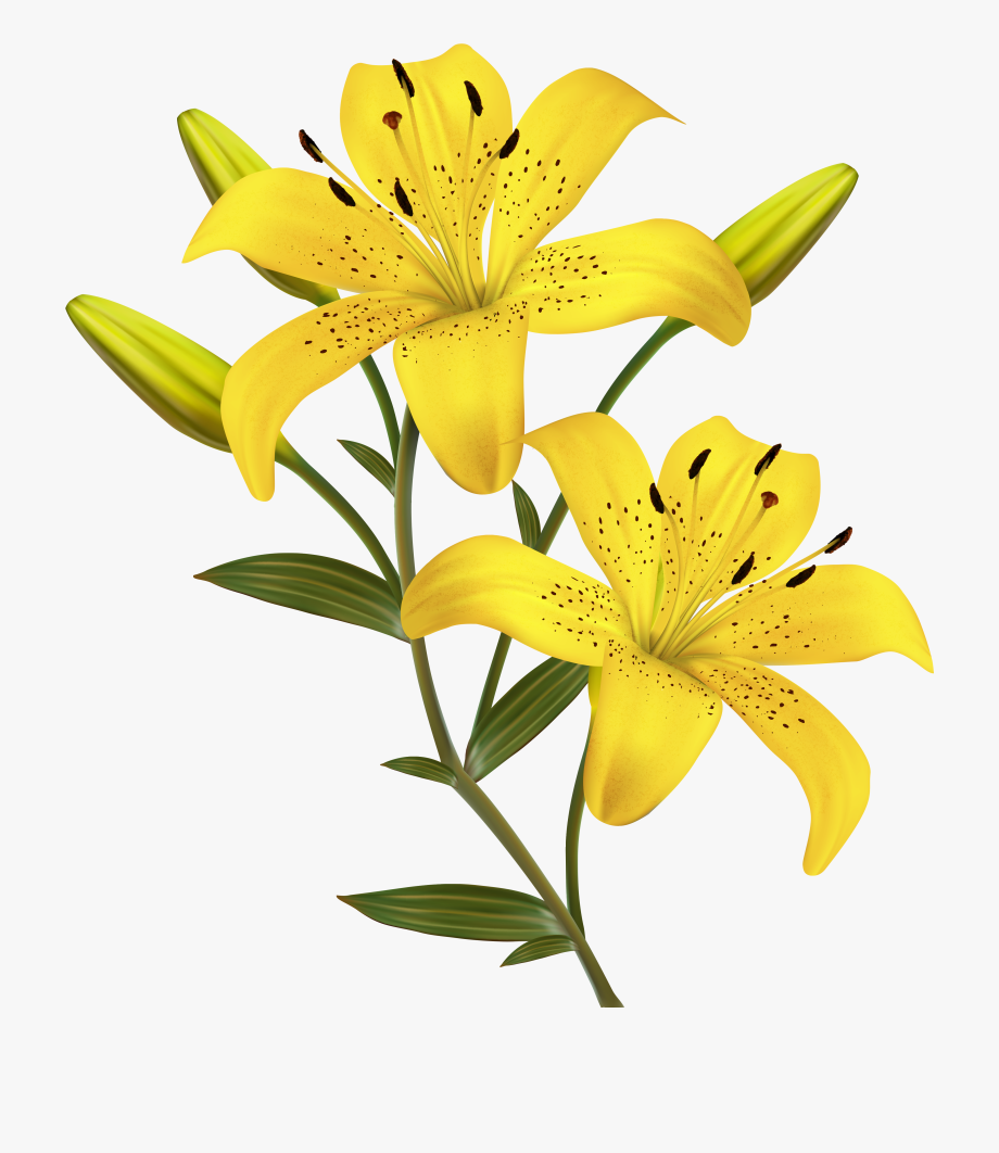 Lilies Clipart Yellow Bell.