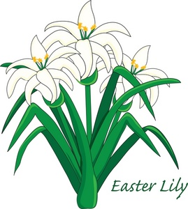 Lily Flower Clipart.