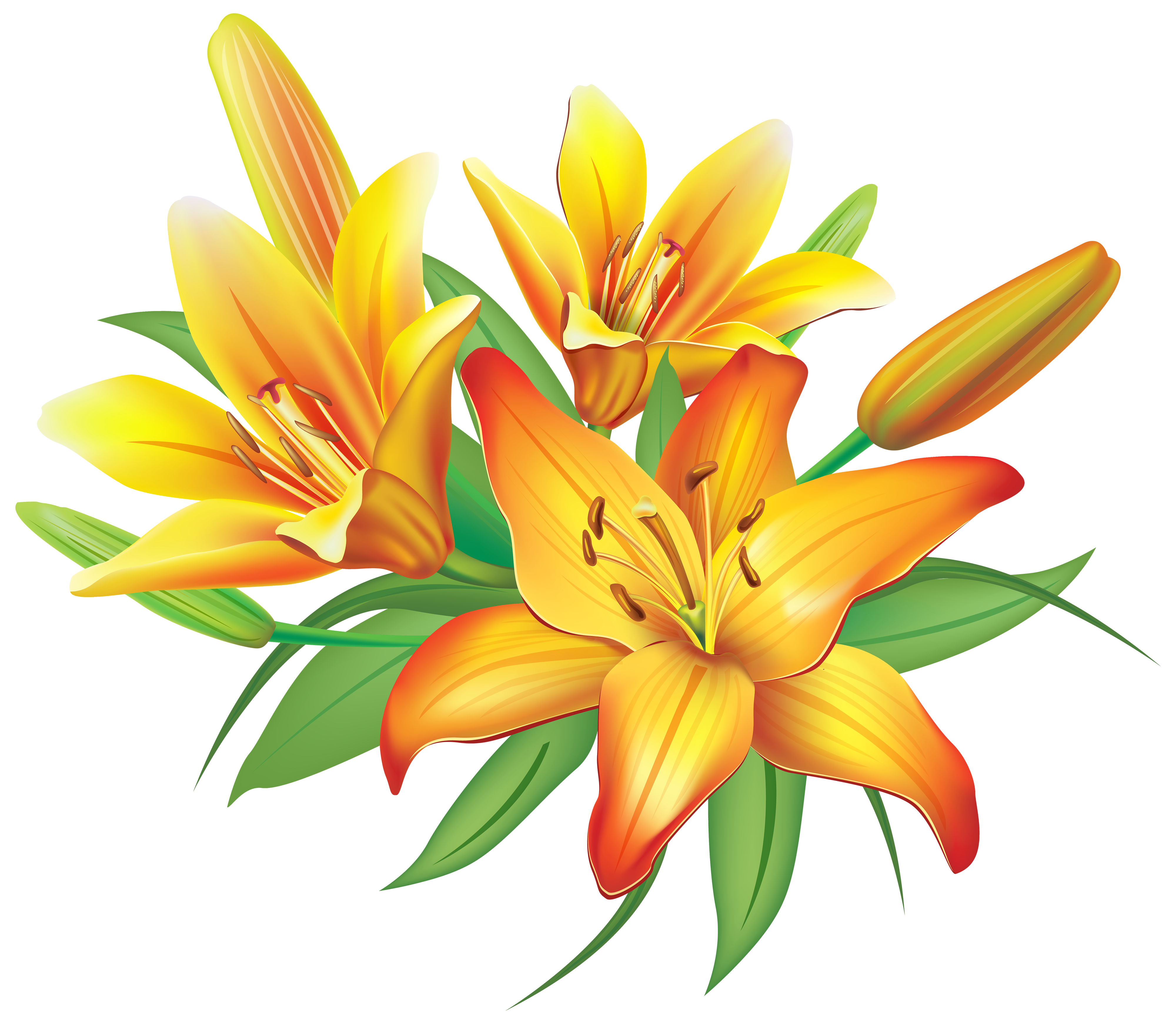 Yellow Lilies Flowers Decoration PNG Clipart Image.