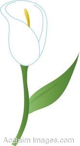 Clip Art of a White Calla Lily.