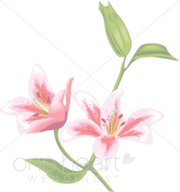 Wedding Lily Art, Lily Graphics, Lilly Graphics.