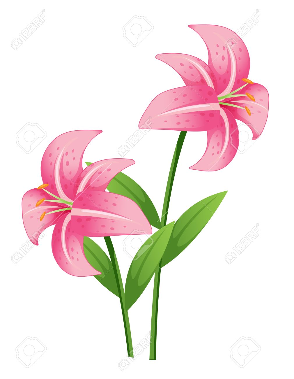 Stargazer lily cliparts free download jpg.