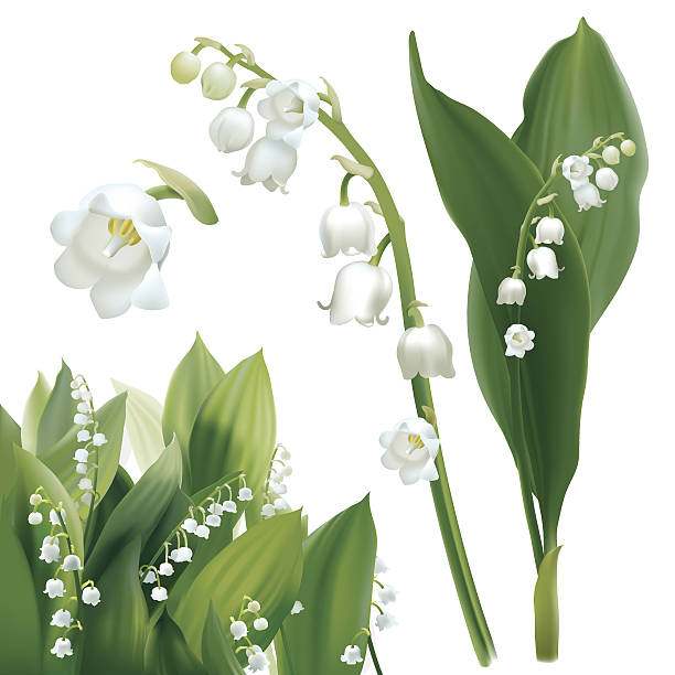 63+ Lily Of The Valley Clipart.