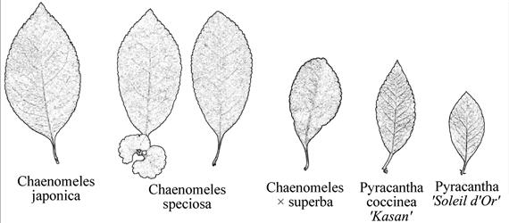 Kertészeti dendrológia.
