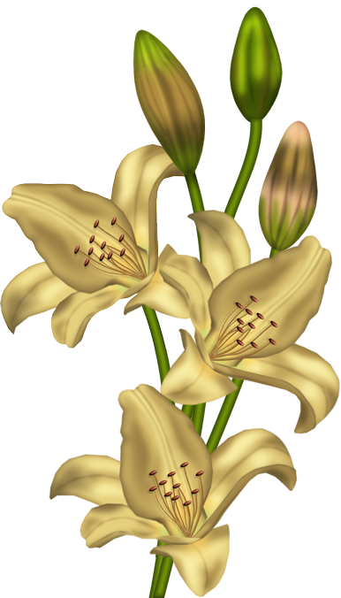 Yellow_Lilium_Clipart.png?m=1366236000.