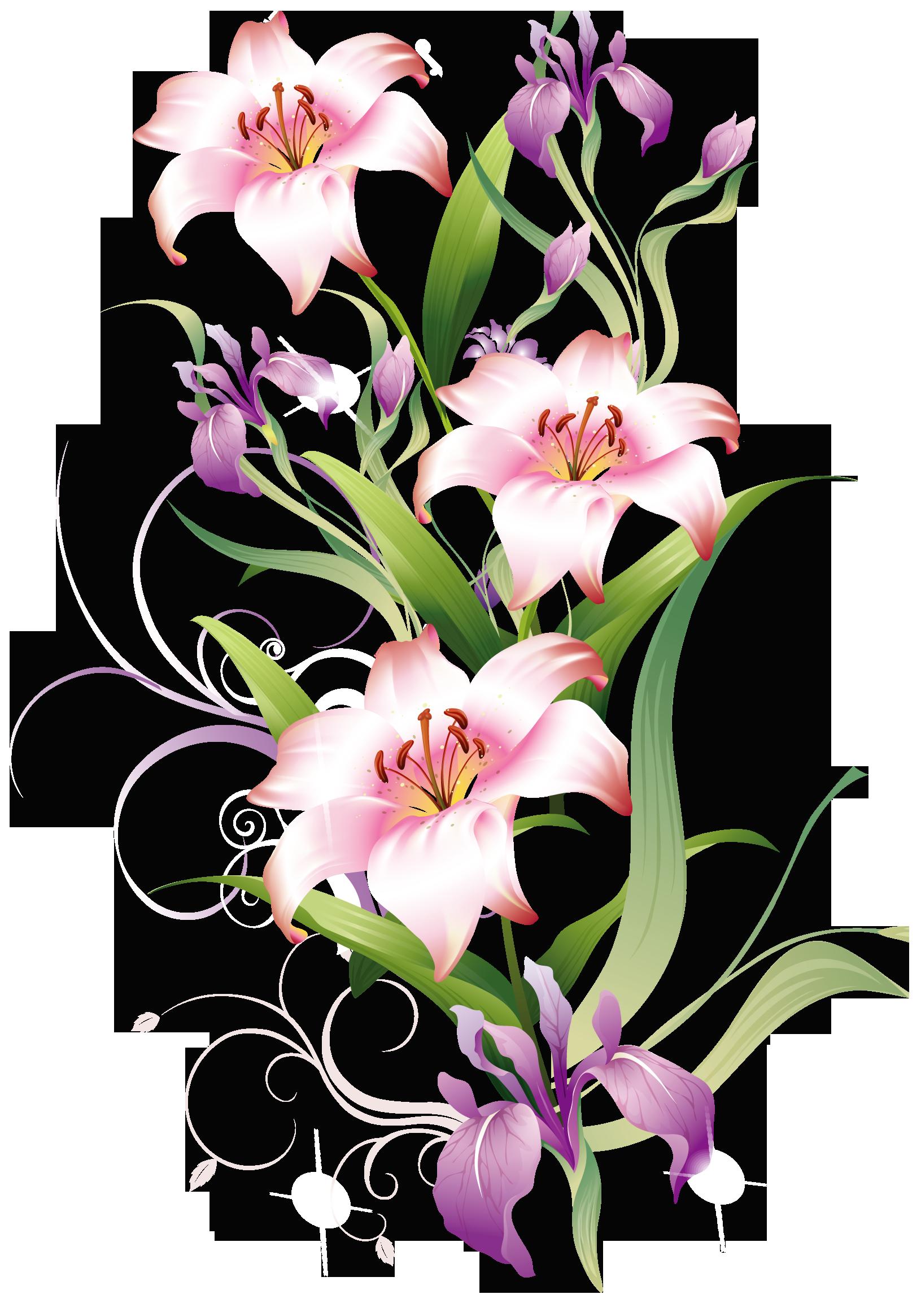 Lilium Decoration PNG Clipart Picture.