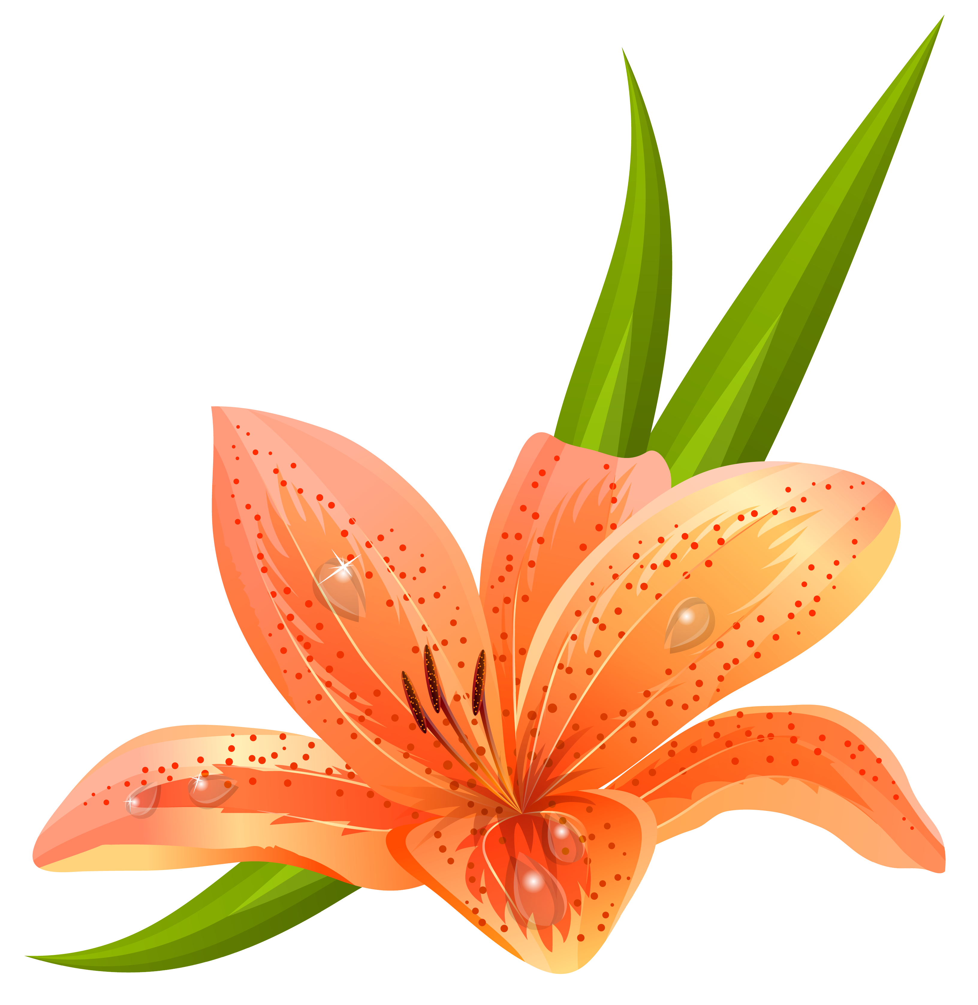 Orange Lilium PNG Clipart Picture.