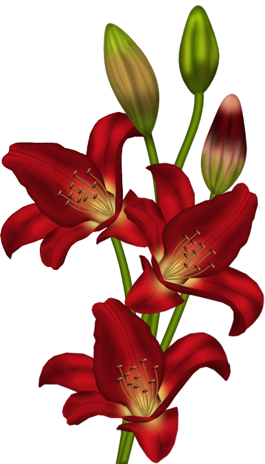Red_Lilium_Clipart.png?m=1366236000.