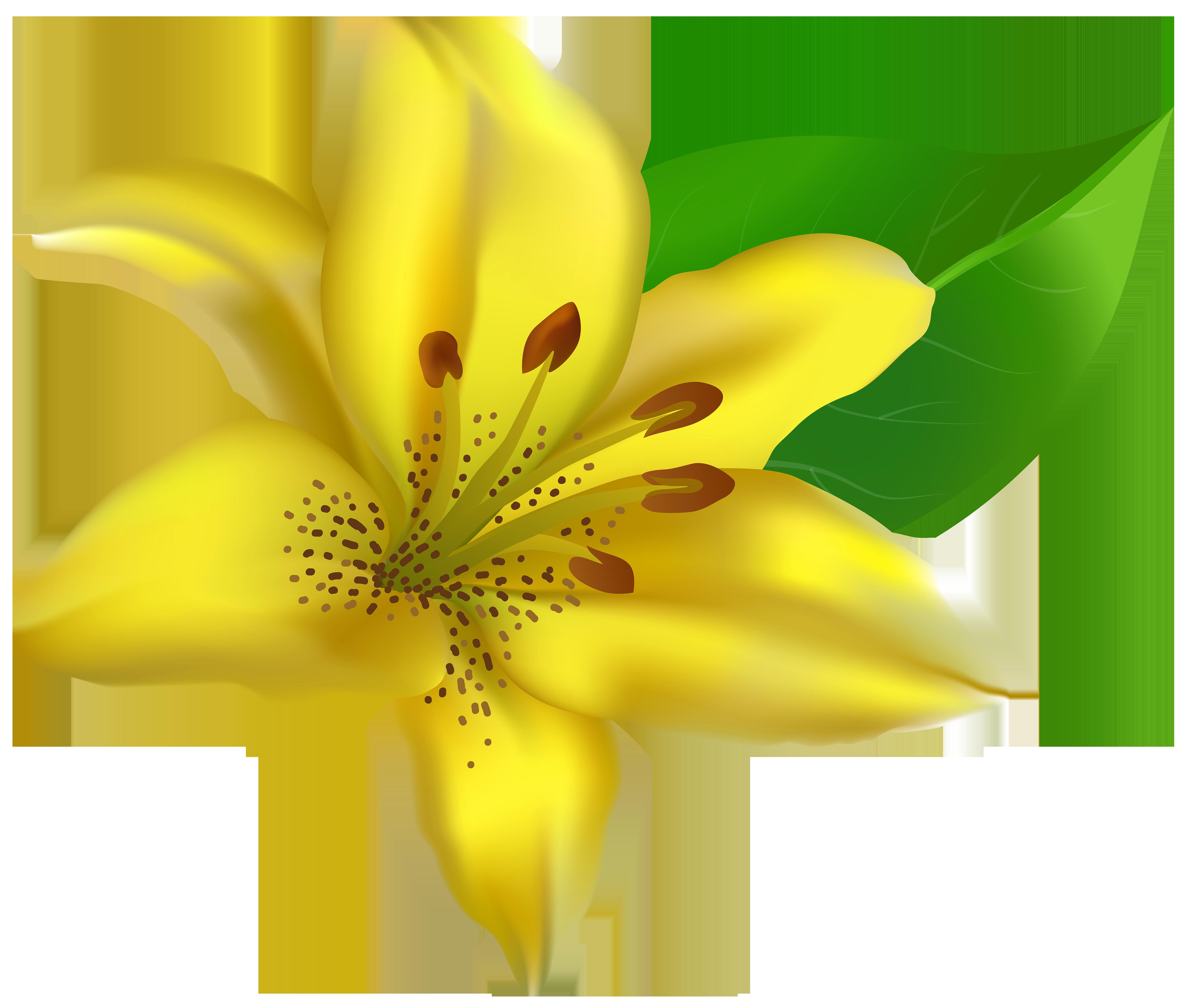 Yellow Lilium Transparent PNG Clip Art Image.