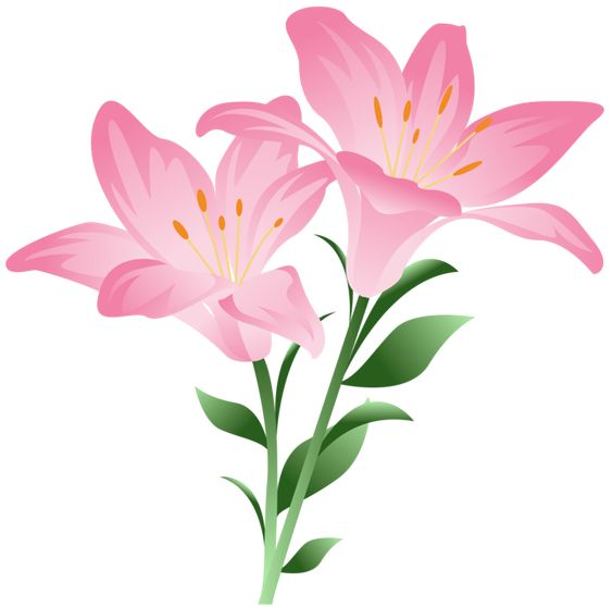 Pink Lilium PNG Clipart Picture.