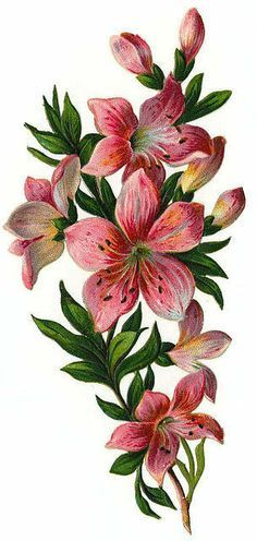 Pin by Kamala on Vingtage Flowers Clipart.
